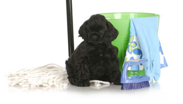 How to Get Dog Urine Smell Out of Carpet and Dry Stains