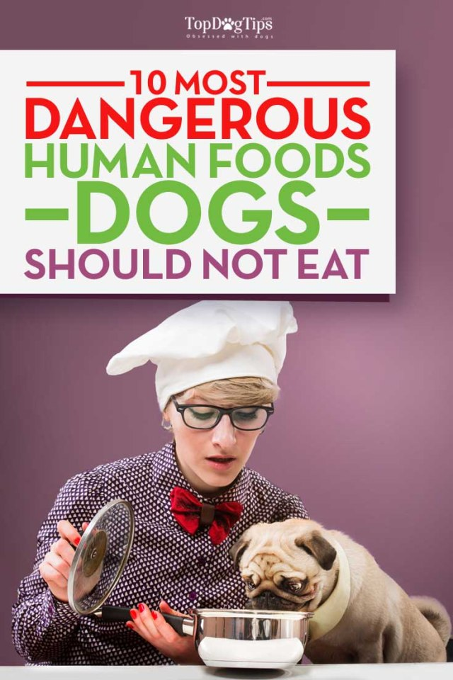 Human Foods That Are Dangerous To Dogs