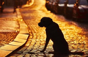 Lost Dog - How to Cope With Every Dog Owner's Worst Nightmare