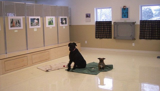 School District Spends $45,000 on Dog Training Facility