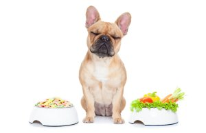 Super Foods for Dogs