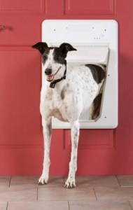 The Convenience of Electronic Doggy door