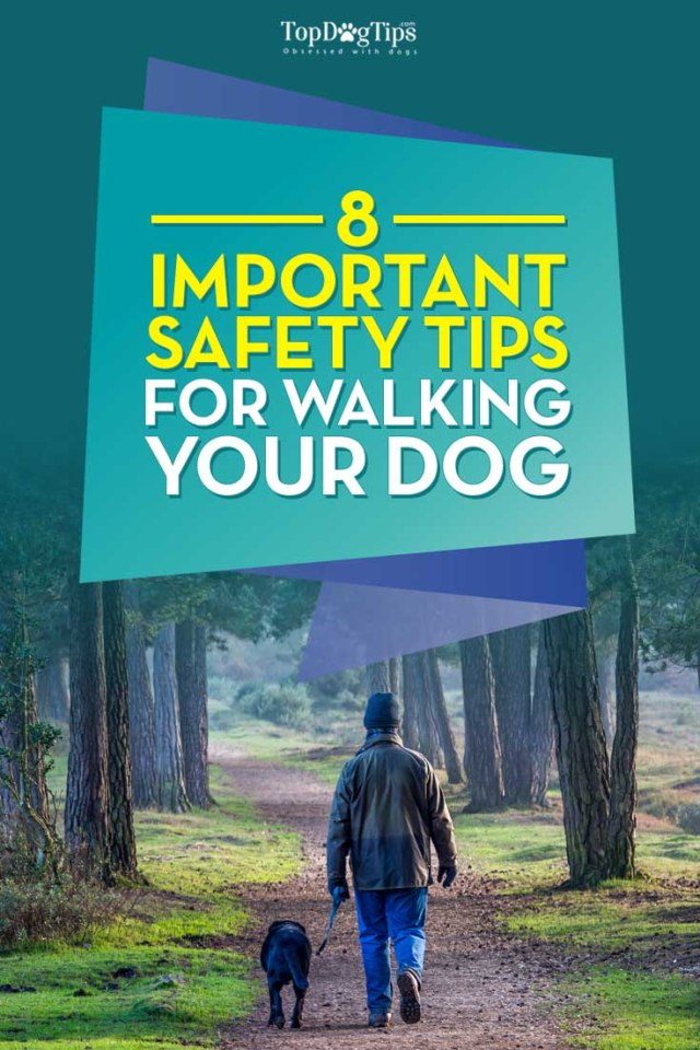 Tips for Walking Your Dog Safely Every Single Day