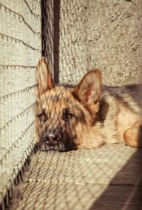 Cost of Owning a Dog Buying from a Shelter