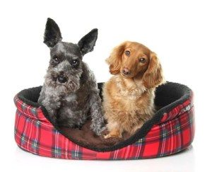 DIY Dog Bed Project - Ideas from Around the Internet for Dogs