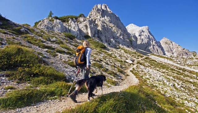 Dog Hiking Gear for Dogs
