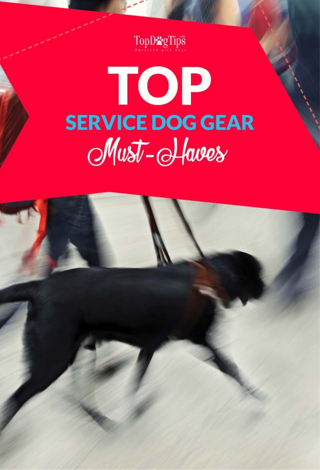 Service Dog Gear Must-Haves