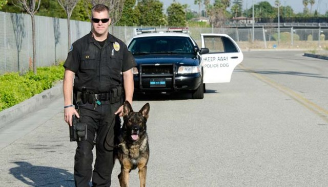 Service Dog Gear for Police Dogs