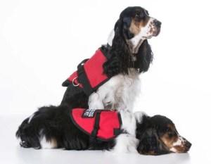 Service Dog Gear Vests