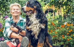 The Benefits of Hiring a Pet Sitter