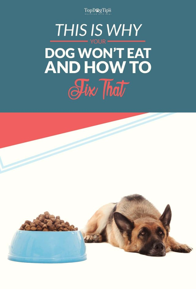 Tips on Why Wont My Dog Eat