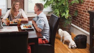 The Best Automatic Dog Food Dispenser