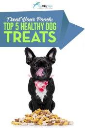 Top Best Healthy Dog Treats