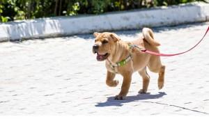 Best Dog Walking Equipment