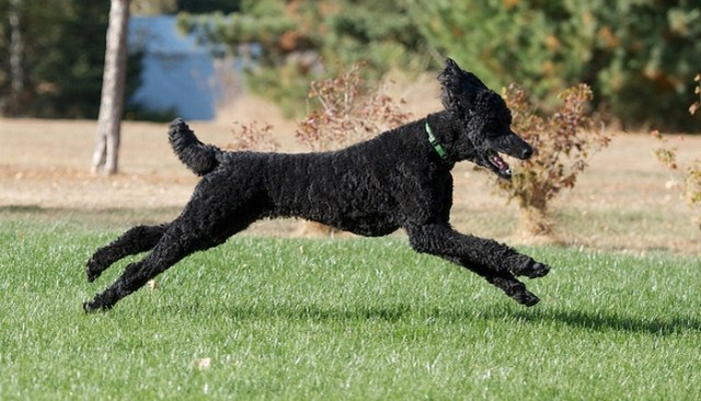 Does Your Dog Need to Get His Workout On