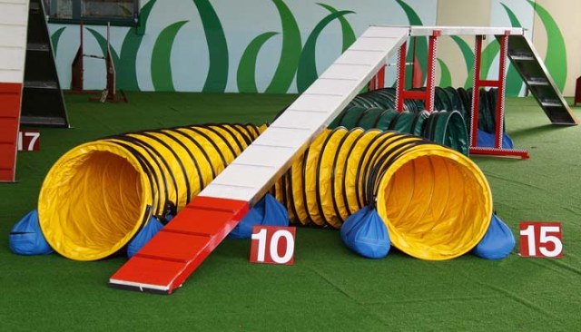 Equipment for Agility Training for Dogs