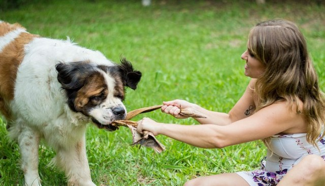 How to Become a Foster Parent for Dogs