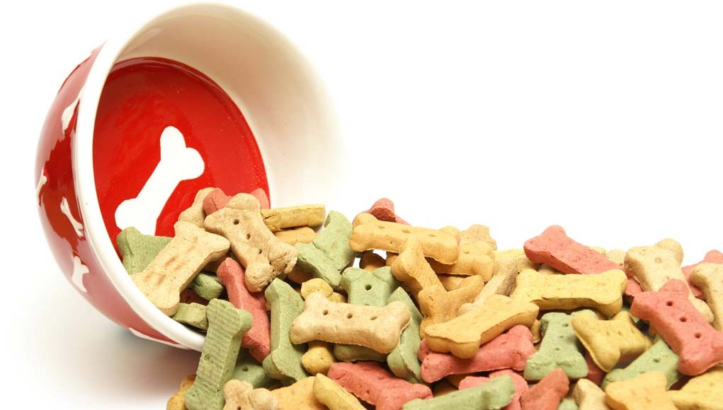 How to Know Which is the Healthiest Dog Food