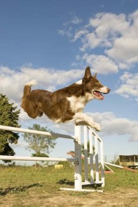 Obedience Training vs Agility Training for Dogs