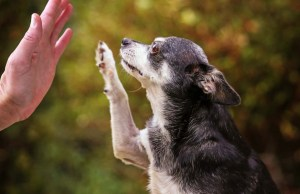 Tips for Keeping Your Senior Dog Active and Healthy