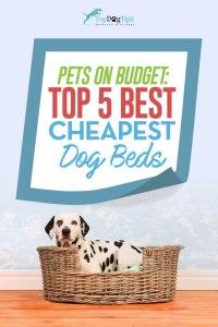 Top Best Cheap Dog Beds