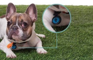 Twigo Dog Tags Are Drawing Attention to National Pet ID Week