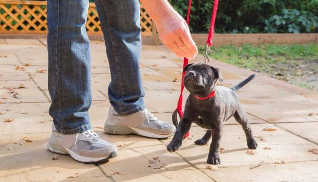 Walking Your Dog - A Guide To Do It Safely 6