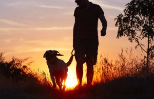 Walking Your Dog - A Guide To Do It Safely