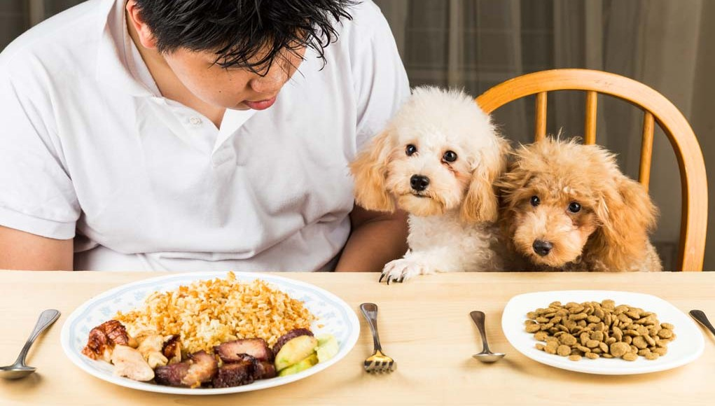 What Are My Dog Nutritional Needs