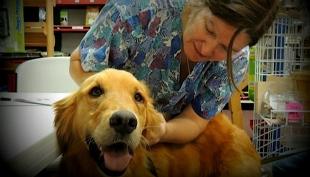 What Is Holistic Veterinary Medicine for Dogs