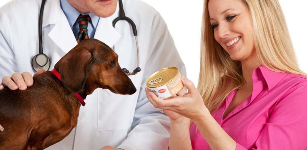 Best Dog Food FAQs