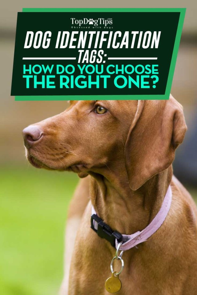 Buying Guide for Dog Identification Tags