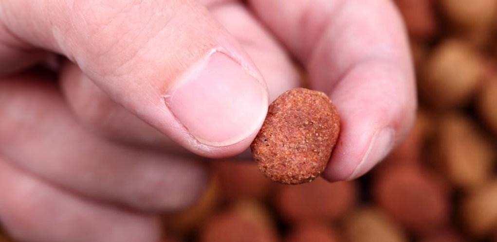 Dog Food Terminology Explained