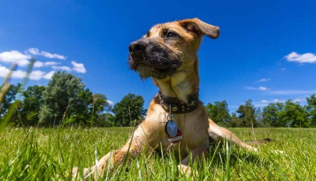 Dog Identification Tags - A Dog Owner Buying Guide