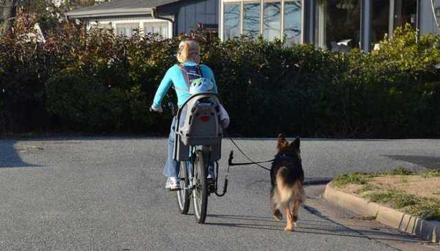 Harvard Study Reveals Dog Owners Are Much Healthier