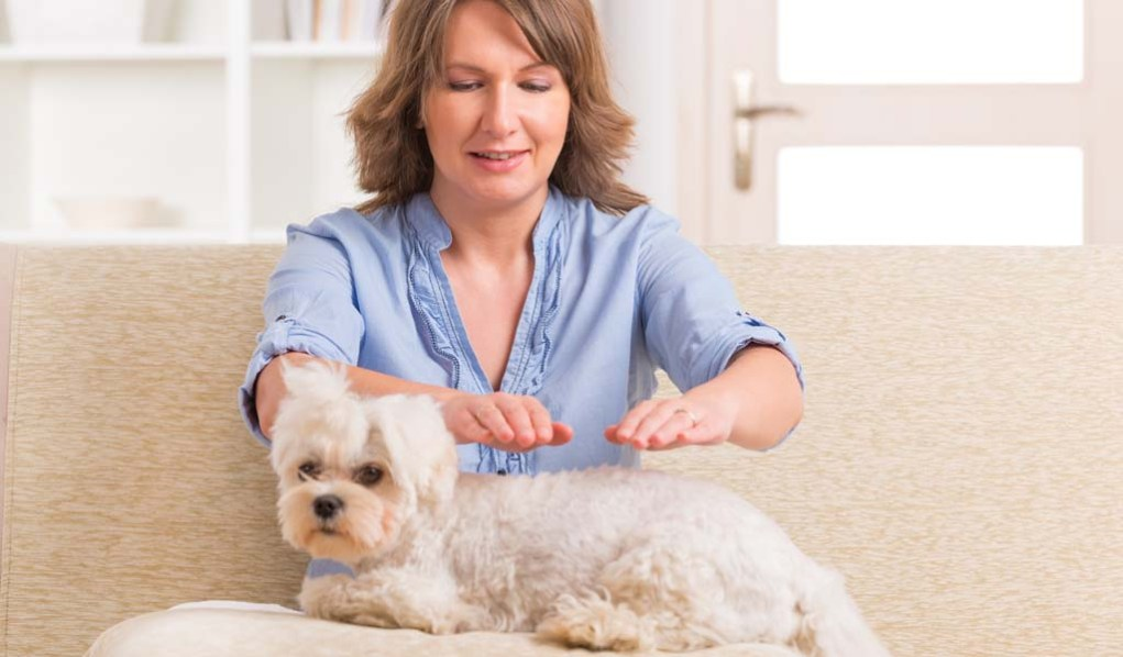 Holistic Dog Health for Healing Dogs from the Inside