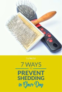 How to Prevent Shedding in Dogs
