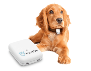 How to choose the best dog GPS tracker