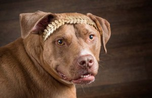 Most Common Dog Breed Stereotypes DEBUNKED