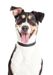 Mutts - Most Common Dog Breed Stereotypes DEBUNKED