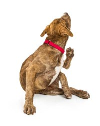 Other ways to fight fleas and ticks on the dog