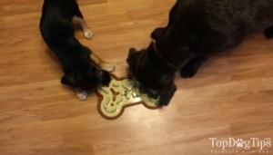The Guzzle Muzzle puzzle dog food bowl