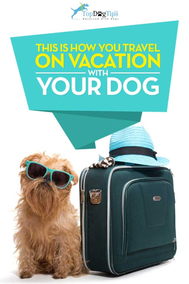 Tips for Holidays with Dogs