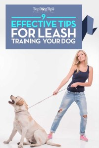 Tips for Leash Training Dogs