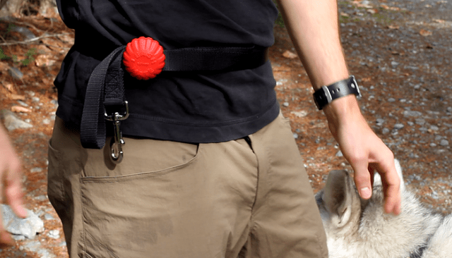 Transform Your Dog's Leash with Lead Mate