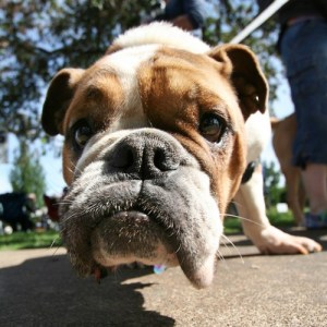 The importance of nose work for dogs