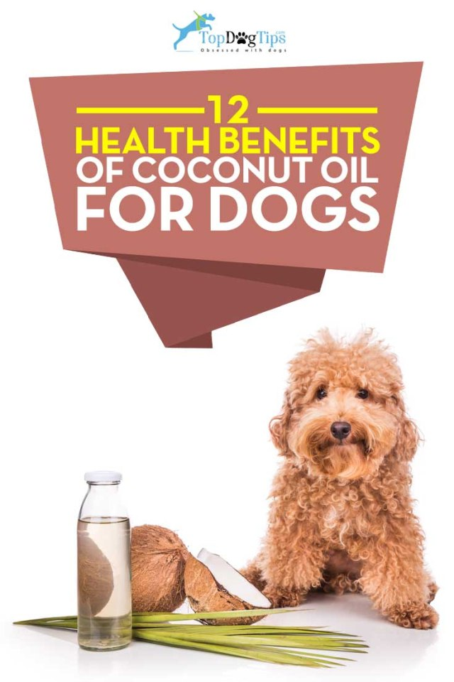 Best Health Benefits of Coconut Oil for Dogs
