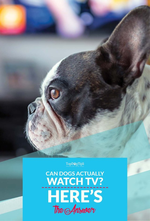 Can Dogs Watch TV