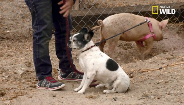 Controversy Erupts Over Episode With Celebrity Dog Trainer