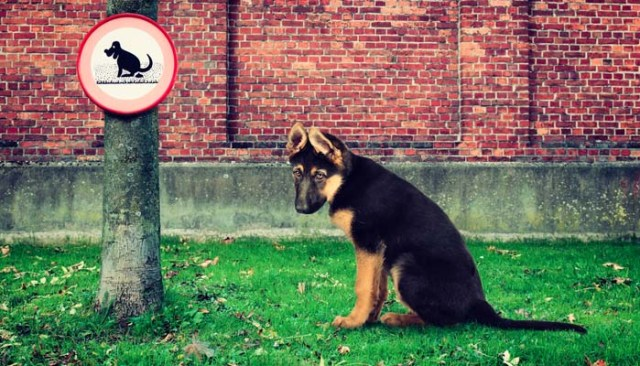 Dog pooping anywhere - Reasons to Leash Your Dog